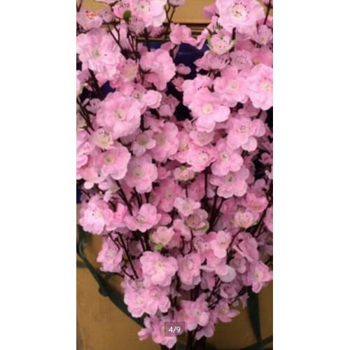 1 cành  hoa anh đào