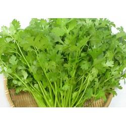 Hạt giống Rau Ngò Rau Thơm 20 gram Đọc kỹ mô tả