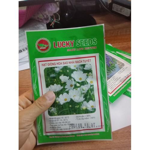 COMBO 10 gói hạt giống hoa sao nháy bạch tuyết LUCKY SEEDS TẶNG 1 phân bón