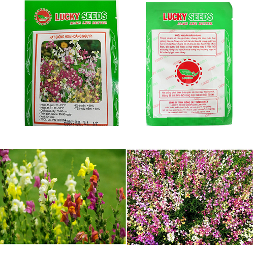 Gói 50 hạt giống hoa hoàng ngư F1 xuất xứ Đức- hạt giống Lucky Seeds - 6122046 , 16280216 , 15_16280216 , 18000 , Goi-50-hat-giong-hoa-hoang-ngu-F1-xuat-xu-Duc-hat-giong-Lucky-Seeds-15_16280216 , sendo.vn , Gói 50 hạt giống hoa hoàng ngư F1 xuất xứ Đức- hạt giống Lucky Seeds