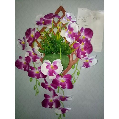 hoa lan treo tường