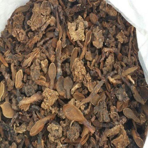 Nấm ngọc cẩu 500g cao cấp Tấn Phát