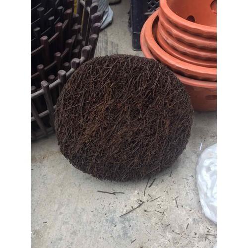 Dớn đĩa trồng Lan 20x20cm