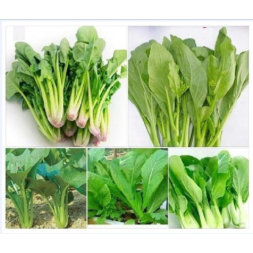 Combo 5 gói hạt giống rau cải _ cái bó xôi. cải ngọt, cải xanh, cải chíp,cải ngòng - 6269594 , 16385786 , 15_16385786 , 85000 , Combo-5-goi-hat-giong-rau-cai-_-cai-bo-xoi.-cai-ngot-cai-xanh-cai-chipcai-ngong-15_16385786 , sendo.vn , Combo 5 gói hạt giống rau cải _ cái bó xôi. cải ngọt, cải xanh, cải chíp,cải ngòng