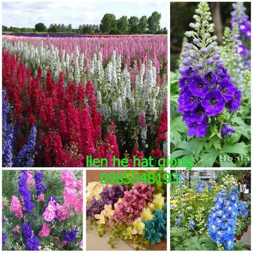 Hạt giống hoa phi yến mix gói 100 hạt - 6251293 , 16369918 , 15_16369918 , 25000 , Hat-giong-hoa-phi-yen-mix-goi-100-hat-15_16369918 , sendo.vn , Hạt giống hoa phi yến mix gói 100 hạt