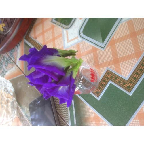 trà hoa đậu biếc tươi