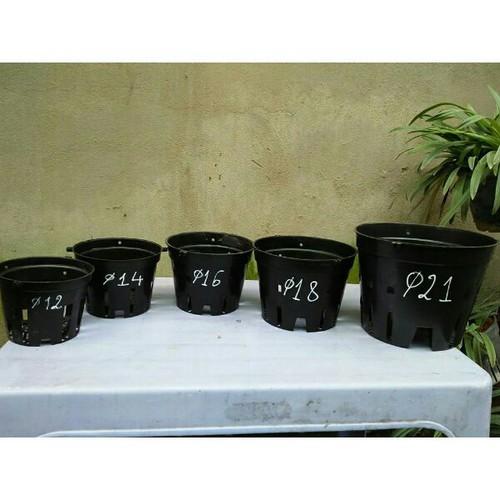 Hót 30 chậu trồng lan 14cm