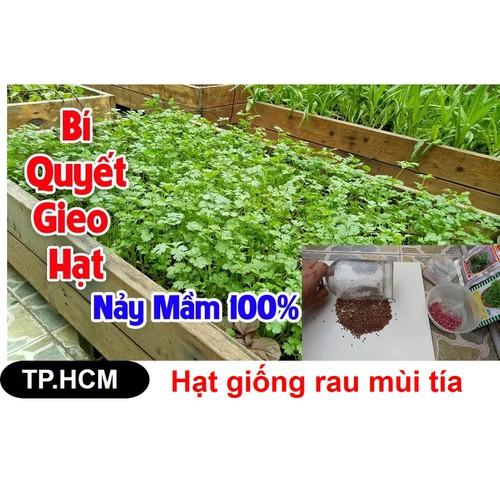 HCM-Hạt giống Mùi tía gói lớn 50gr - Cách trồng mùi tía