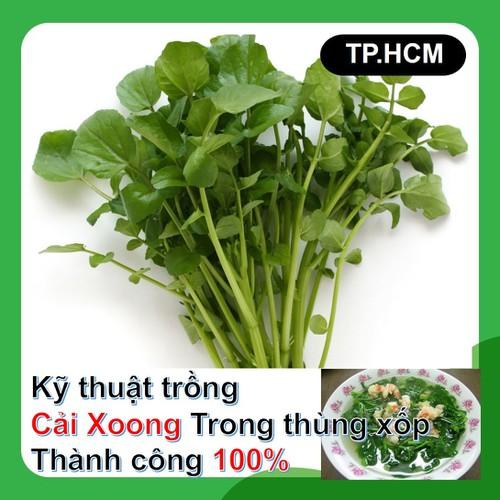 HCM-Hạt giống rau cải xoong gói 0.2gr - Kỹ thuật trồng rau cải xoong trong thùng xốp