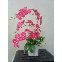 sét hoa lan hồ điệp kèm cỏ điểm