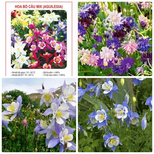 COMBO 2 gói hạt giống hoa bồ câu mix nhiều màu TẶNG 1 phân bón - 6891127 , 16875908 , 15_16875908 , 49000 , COMBO-2-goi-hat-giong-hoa-bo-cau-mix-nhieu-mau-TANG-1-phan-bon-15_16875908 , sendo.vn , COMBO 2 gói hạt giống hoa bồ câu mix nhiều màu TẶNG 1 phân bón