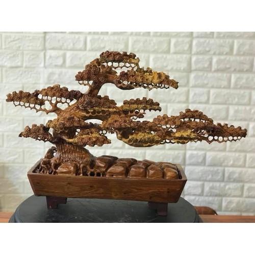cây tùng gỗ hương
