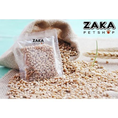 Hạt giống cỏ mèo 1kg