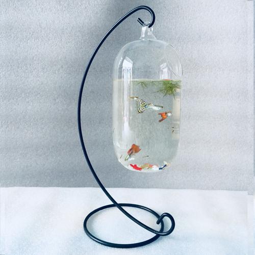 Bể cá mini C33 treo bình thủy tinh D21 - Tặng phụ kiện