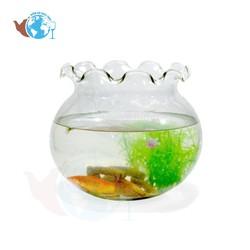 Bể cá thủy tinh hồ cá mini chậu cây miệng bèo D30Cm X H25Cm - B12 Tặng kèm Rong + Sỏi