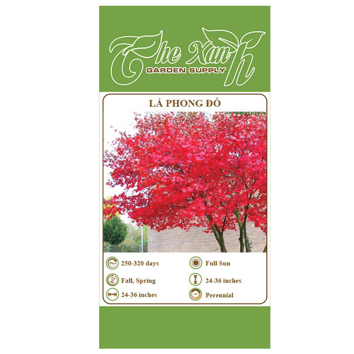 Hạt giống lá phong đỏ