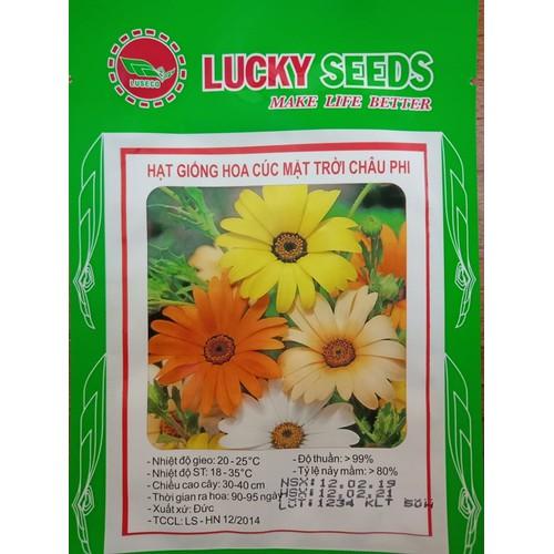 Hạt giống hoa cúc mặt trời châu phi - 50 hạt