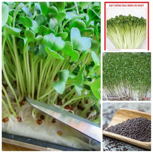 COMBO 5 gói hạt giống rau mầm cải ngọt trắng TẶNG 1 phân bón - 4802782 , 17108231 , 15_17108231 , 75000 , COMBO-5-goi-hat-giong-rau-mam-cai-ngot-trang-TANG-1-phan-bon-15_17108231 , sendo.vn , COMBO 5 gói hạt giống rau mầm cải ngọt trắng TẶNG 1 phân bón