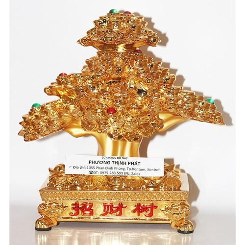 Cây Kim Tiền Vàng Phong Thủy - 6348737 , 16454765 , 15_16454765 , 650000 , Cay-Kim-Tien-Vang-Phong-Thuy-15_16454765 , sendo.vn , Cây Kim Tiền Vàng Phong Thủy