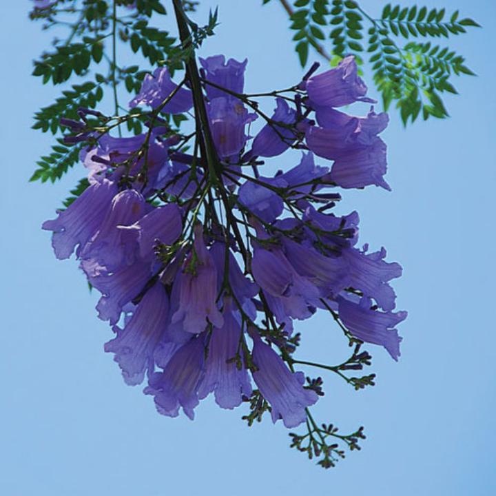 cây ưa nắng nóng