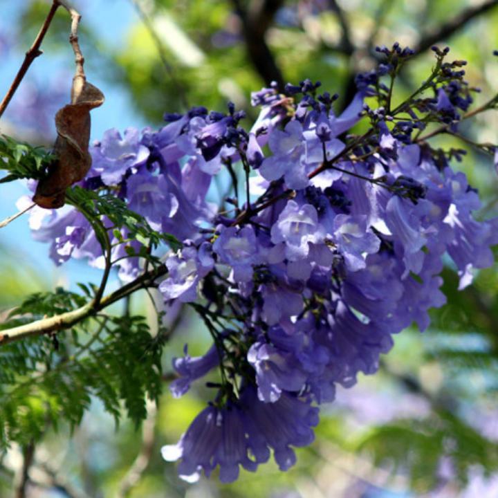 Hoa có màu tím