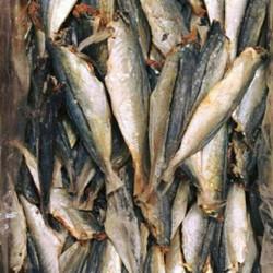 cá nục khô cửa lò