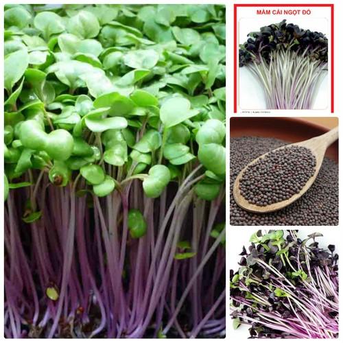 COMBO 5 gói hạt giống rau mầm cải ngọt đỏ TẶNG 1 phân bón