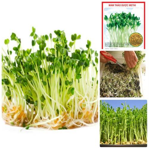 COMBO 5 gói hạt giống mầm thảo dược Methi TẶNG 1 phân bón - 7323901 , 17122414 , 15_17122414 , 89000 , COMBO-5-goi-hat-giong-mam-thao-duoc-Methi-TANG-1-phan-bon-15_17122414 , sendo.vn , COMBO 5 gói hạt giống mầm thảo dược Methi TẶNG 1 phân bón