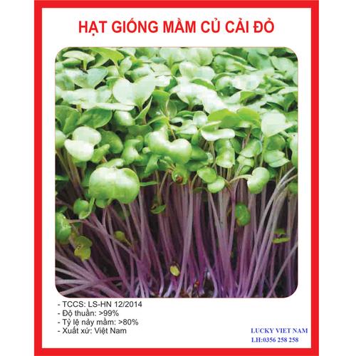 Hạt giống mầm củ cải đỏ - 50 gr - 4805800 , 17120968 , 15_17120968 , 23000 , Hat-giong-mam-cu-cai-do-50-gr-15_17120968 , sendo.vn , Hạt giống mầm củ cải đỏ - 50 gr