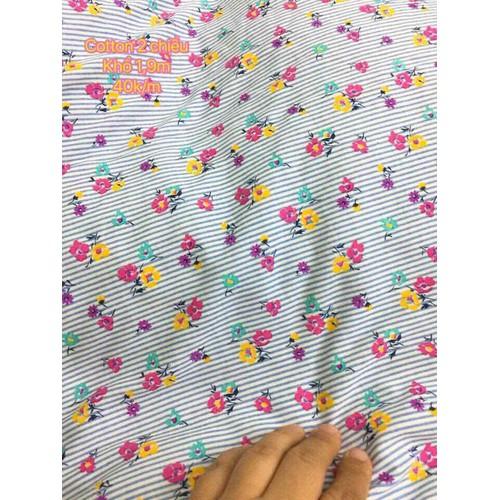 vải cotton 2c kẻ hoa