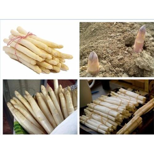 HẠT GIỐNG MĂNG TÂY TRẮNG_ tặng kèm 3 viên nén ươm hạt