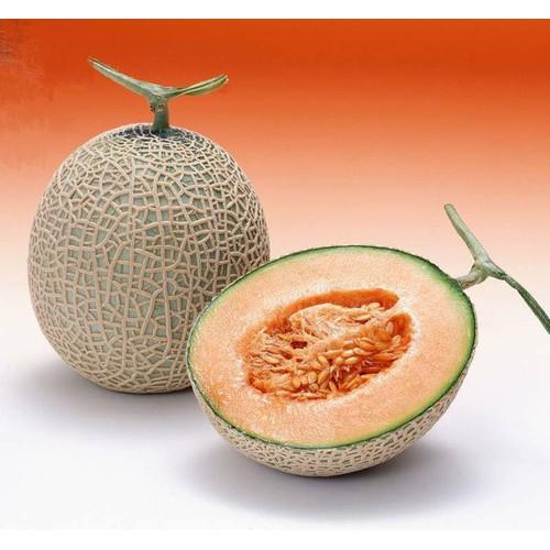 Bộ 4 gói hạt giống dưa lưới vỏ xanh_ tặng kèm 1 gói thuốc kích thích hạt nảy mầm