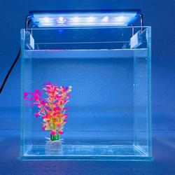 Bể cá mini để bàn combo Hồ , đèn , phụ kiện