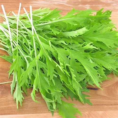 Gói 10 gram - hạt giống cải bẹ đuôi phụng pn – 28