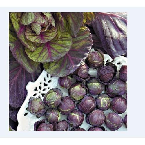Combo 3 gói hạt giống bắp cải tí hon tím_ tặng kèm 1 gói thuốc kích thích hạt nảy mầm - 7463790 , 17182614 , 15_17182614 , 80000 , Combo-3-goi-hat-giong-bap-cai-ti-hon-tim_-tang-kem-1-goi-thuoc-kich-thich-hat-nay-mam-15_17182614 , sendo.vn , Combo 3 gói hạt giống bắp cải tí hon tím_ tặng kèm 1 gói thuốc kích thích hạt nảy mầm