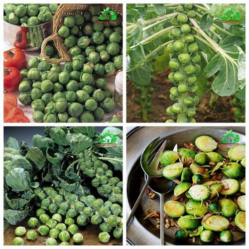 Combo 3 gói hạt giống bắp cải tí hon xanh_ tặng kèm 1 gói thuốc kích thích hạt nảy mầm - 7463697 , 17182496 , 15_17182496 , 90000 , Combo-3-goi-hat-giong-bap-cai-ti-hon-xanh_-tang-kem-1-goi-thuoc-kich-thich-hat-nay-mam-15_17182496 , sendo.vn , Combo 3 gói hạt giống bắp cải tí hon xanh_ tặng kèm 1 gói thuốc kích thích hạt nảy mầm