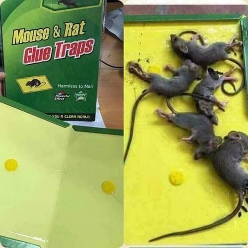 Bẫy Keo dính chuột