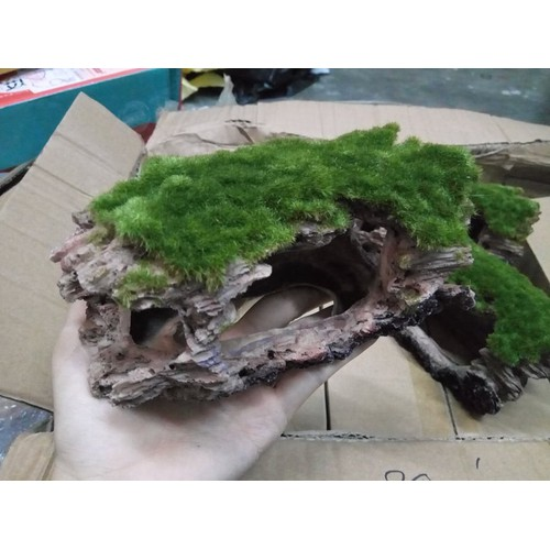 Khúc gỗ phủ rêu