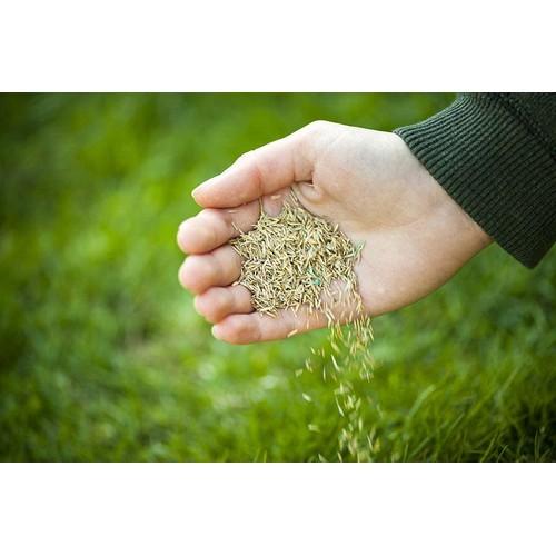 HẠT CỎ NHUNG NHẬT 1kG - cỏ thảm