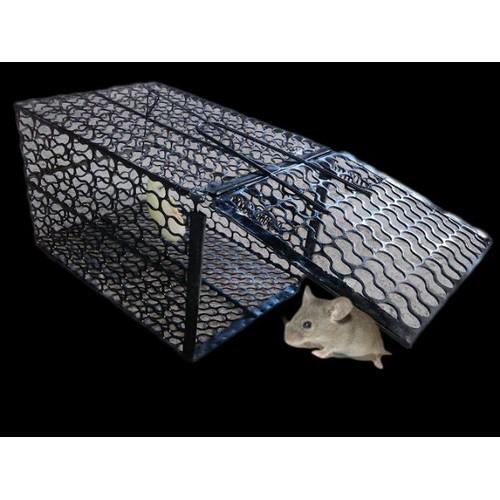Lồng bẫy chuột cực nhạy