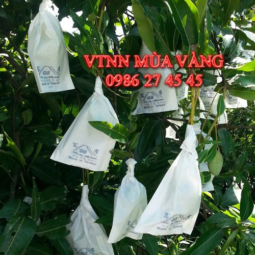 Túi Bao Trái Xoài 1000 cái 670k Giấy Trắng 21cm x 32cm Go TAIWAN