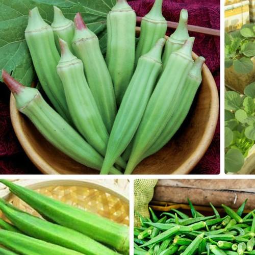 Hạt giống đậu bắp - 8968715 , 18602403 , 15_18602403 , 20000 , Hat-giong-dau-bap-15_18602403 , sendo.vn , Hạt giống đậu bắp