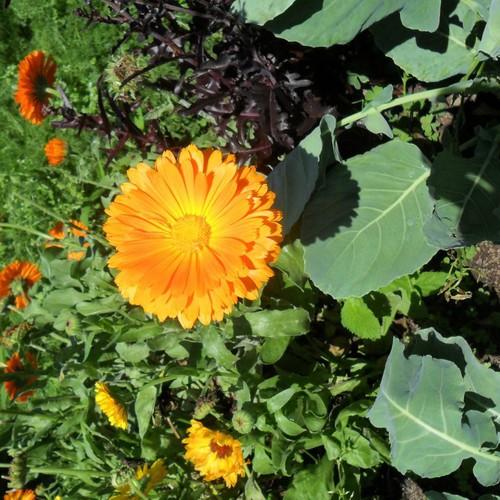 Bộ 4 gói hạt giống hoa cúc susi - 9043979 , 18714607 , 15_18714607 , 40000 , Bo-4-goi-hat-giong-hoa-cuc-susi-15_18714607 , sendo.vn , Bộ 4 gói hạt giống hoa cúc susi
