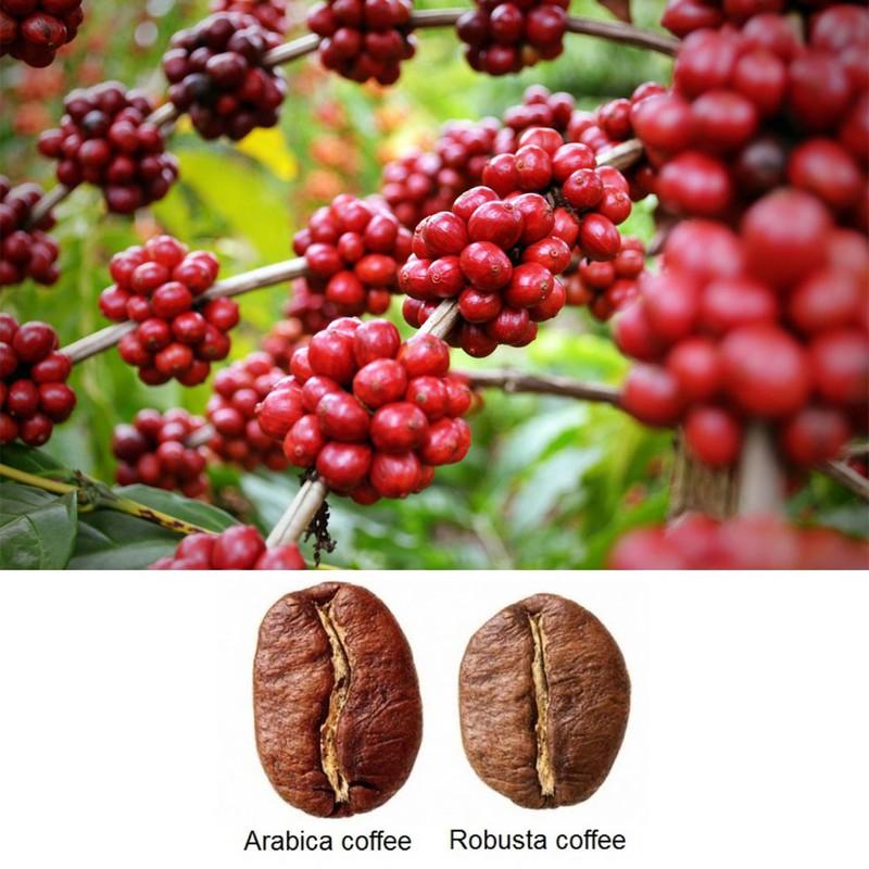Cà phê Robus Mạnh Mẽ - Gói 500gr - Thành phần hạt Robusta & Culi nguyên chất có bơ - Thương hiệu Rey Cafe 1