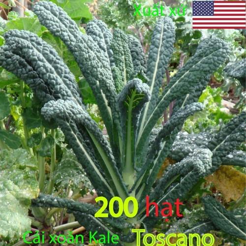 Hạt giống cải xoăn xanh-cải xoăn Kale - Kale Toscano 200 hạt cải xoăn kale toscano - HGKToscano200