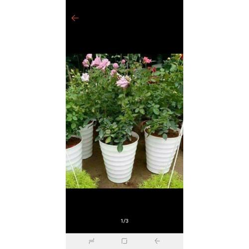xô trồng cây hoa siêu đẹp rộng 25cm x30cm