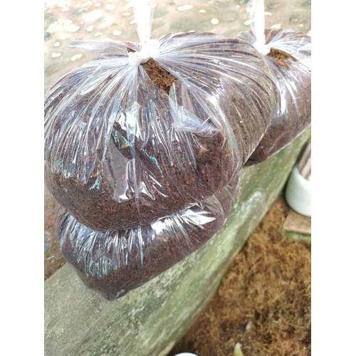 sơ dừa đã xử lý trồng sen đá xương rồng