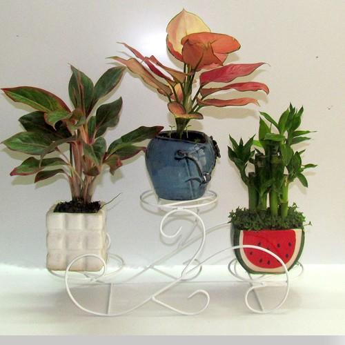 Kệ - Gía đỡ bình hoa,chậu hoa MA003T