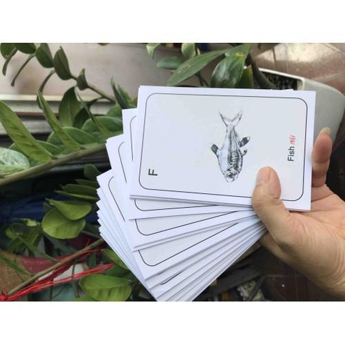 Bộ 32 thẻ 4D animal