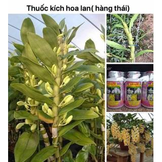 thuốc kích hoa lan giúp lan trổ bông - bông to hơn và lâu tàn - 524 thumbnail